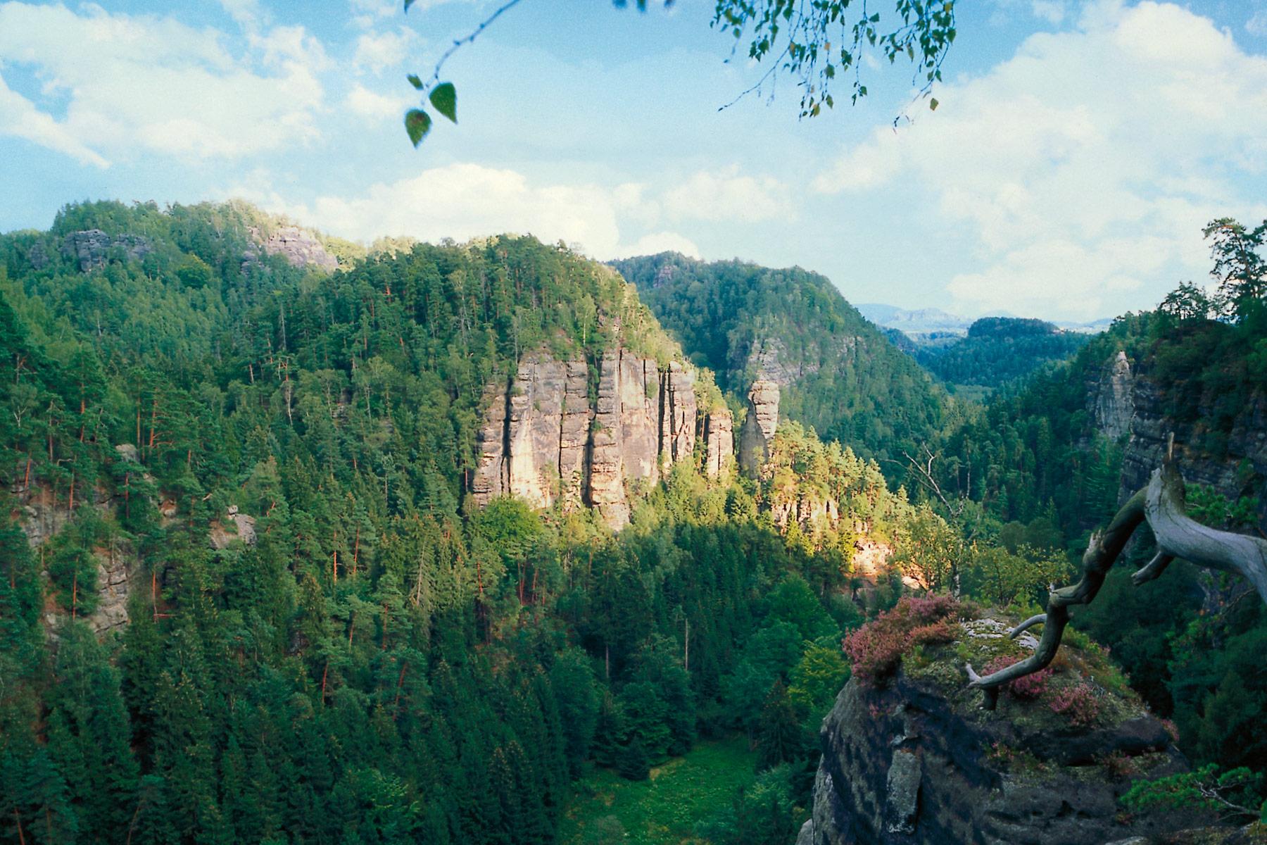Felsen im Elbsandsteingebirge bei Bad Schandau